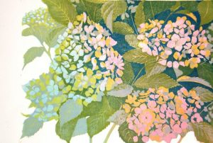 Hortensia, onder links/Hydrangea, bottom left